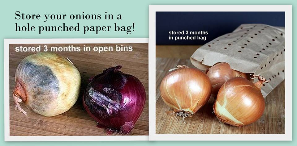 Store your Onions in Paper Bag with holes
